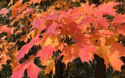 5 Tips to Create a Perfect Color Palette — Autumn