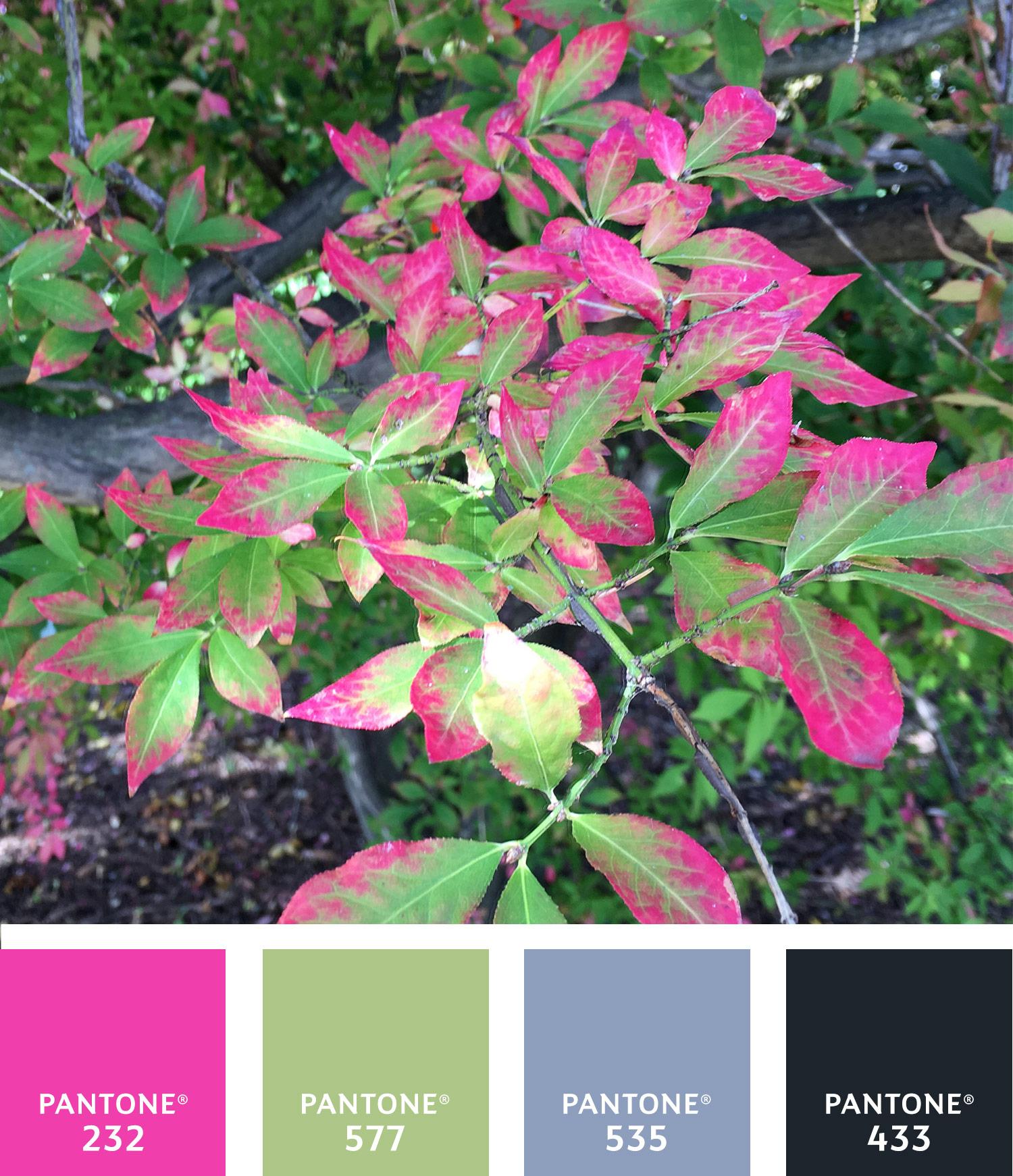 Autumn Palette 2