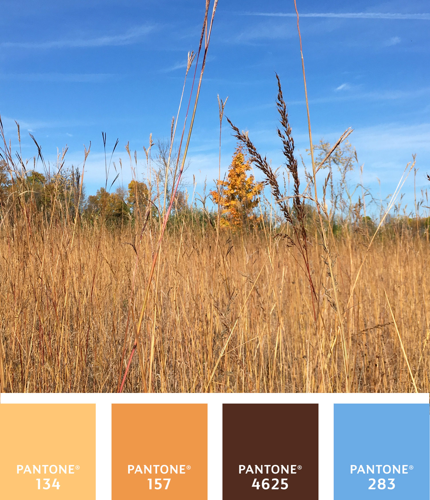 autumn-palette-3-750w